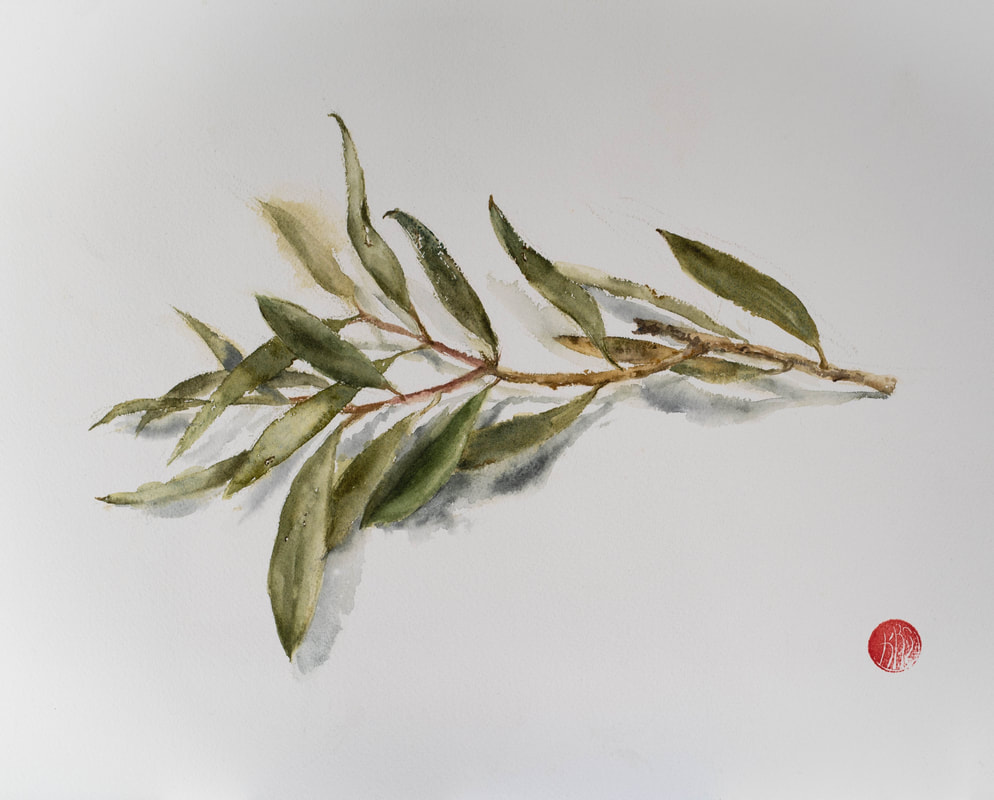 watercolour, watercolour, krsmith_artist, melaleauca, branch, leaves, botanical_watercolour