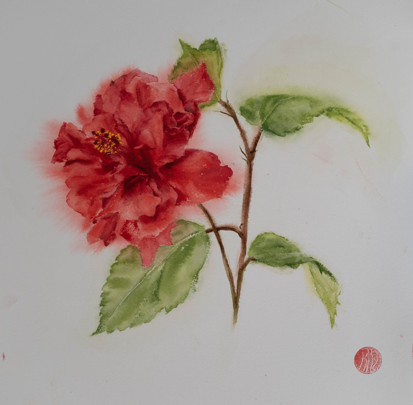 watercolour, watercolour, krsmith_artist, botanical_watercolour, hibiscus