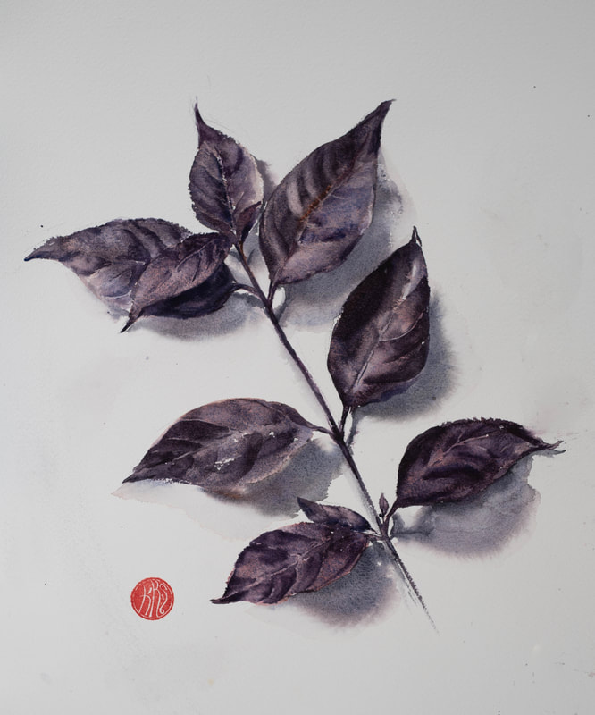 watercolour, watercolour, krsmith_artist, botanical_watercolour, leaf_study