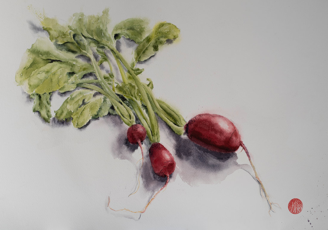 watercolour, watercolour, krsmith_artist, botanical_watercolour, radish